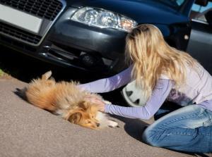 Τροχαίο ατύχημα με αδέσποτο